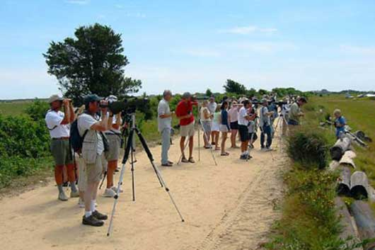 Birders watching the Red Footed Falcon at Martha's Vineyard. Photo by Julian Hough at surfbirds.com