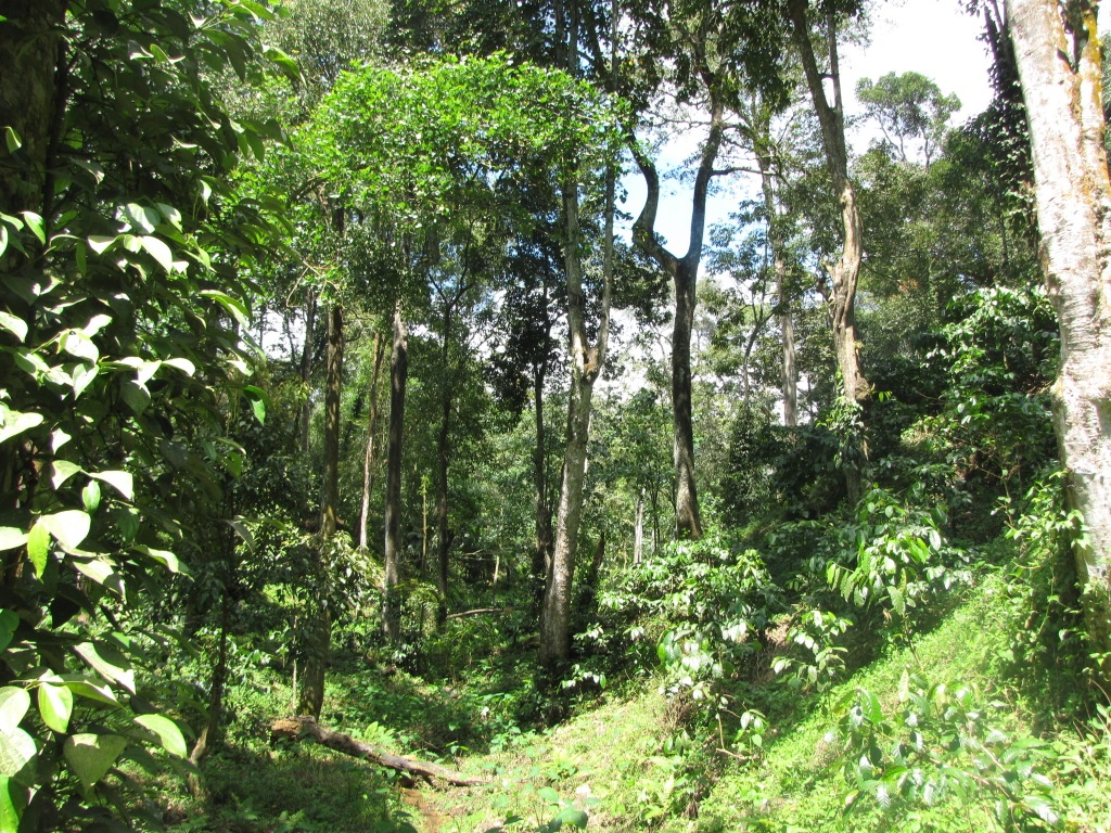 This coffee estate is a site of human activity. Does that  preclude any conservation potential?