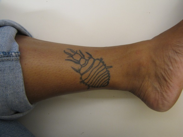 My first tattoo: an antlion larvae, my first study organism.